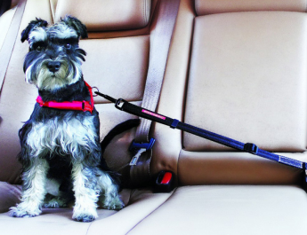 Ensuring the Safety of Small Dogs when Travelling